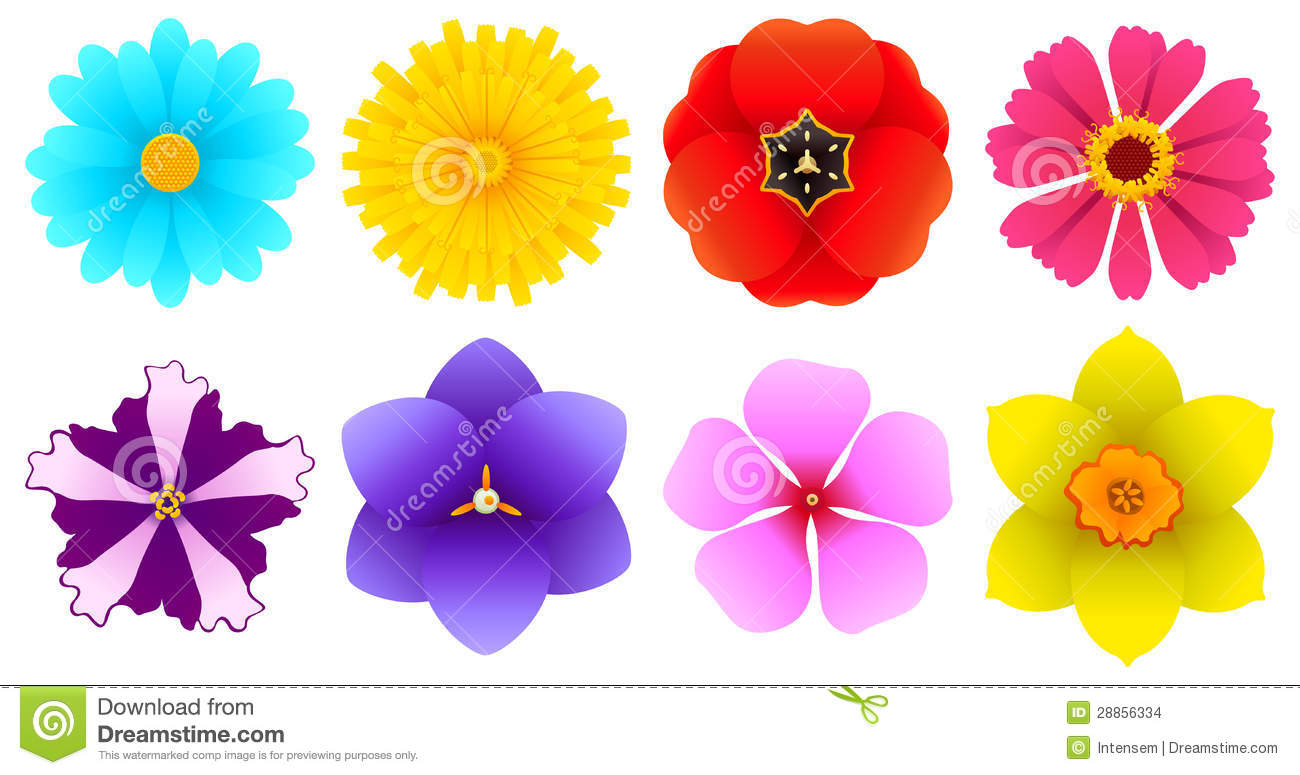 Different Kinds Flowers Top View Stock Image