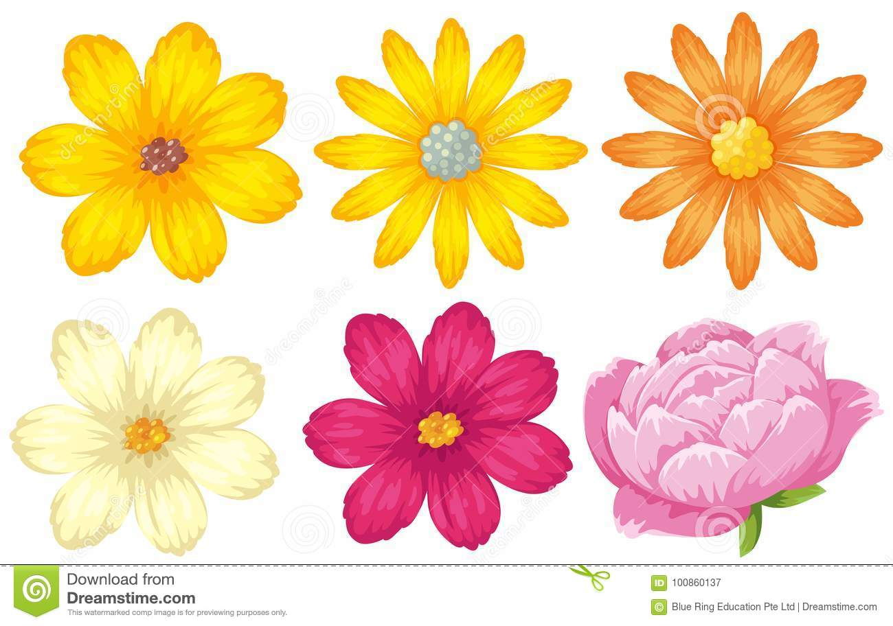 Different Kinds Of Flowers In Yellow And Pink Stock Vector