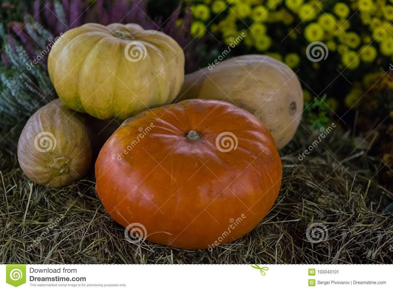Different Kinds Of Pumpkins. Long Round Yellow Orange ...