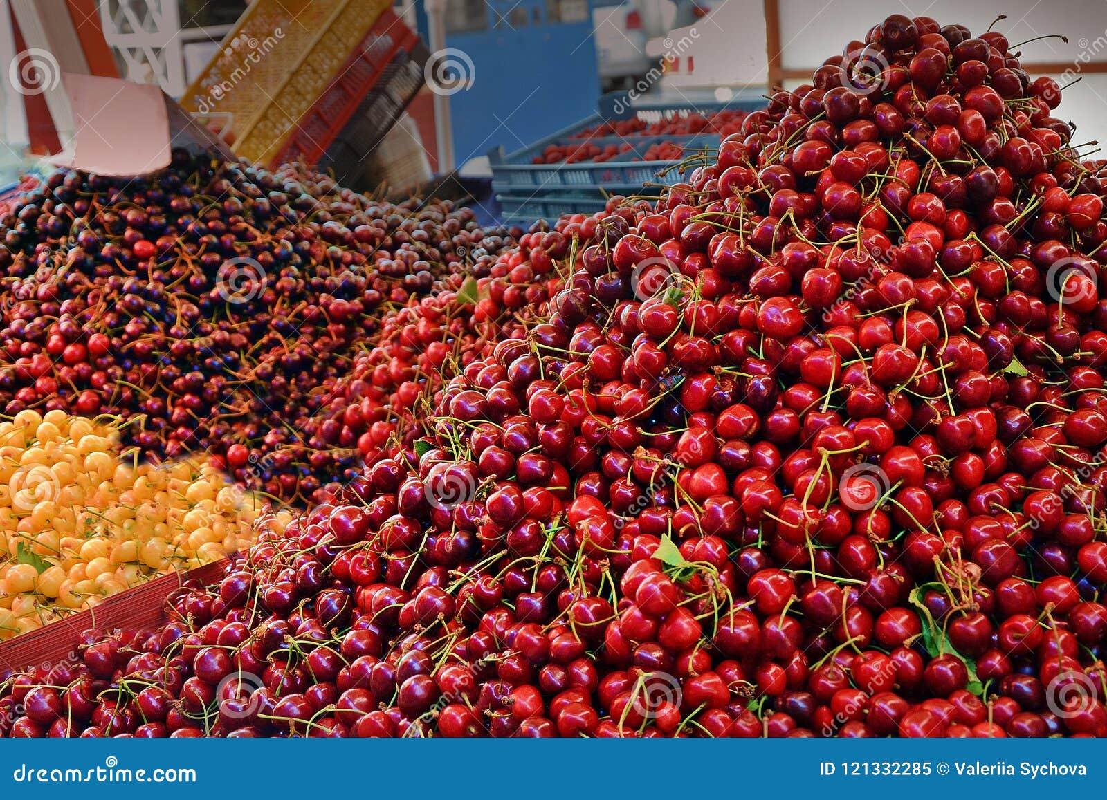 Different kinds sweet cherries on market. Sale juicy fruits in city Varna, Bulgaria. proper nutrition, vitamins, healthy food