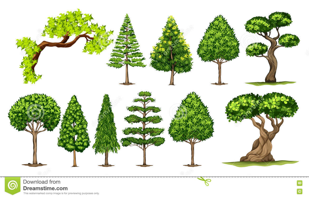 Different Kinds Of Trees Stock Vector Illustration Of