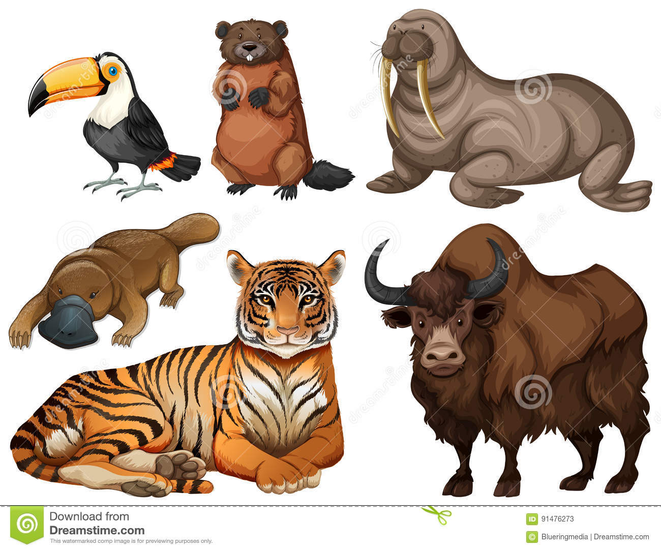 Different Kinds Of Wild Animals Stock Vector