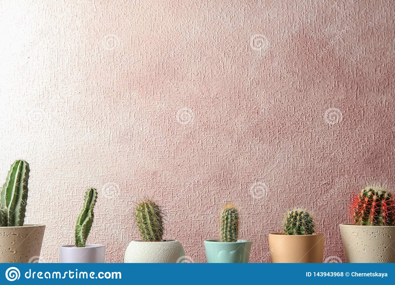 Different potted cacti near color wall. Interior decor