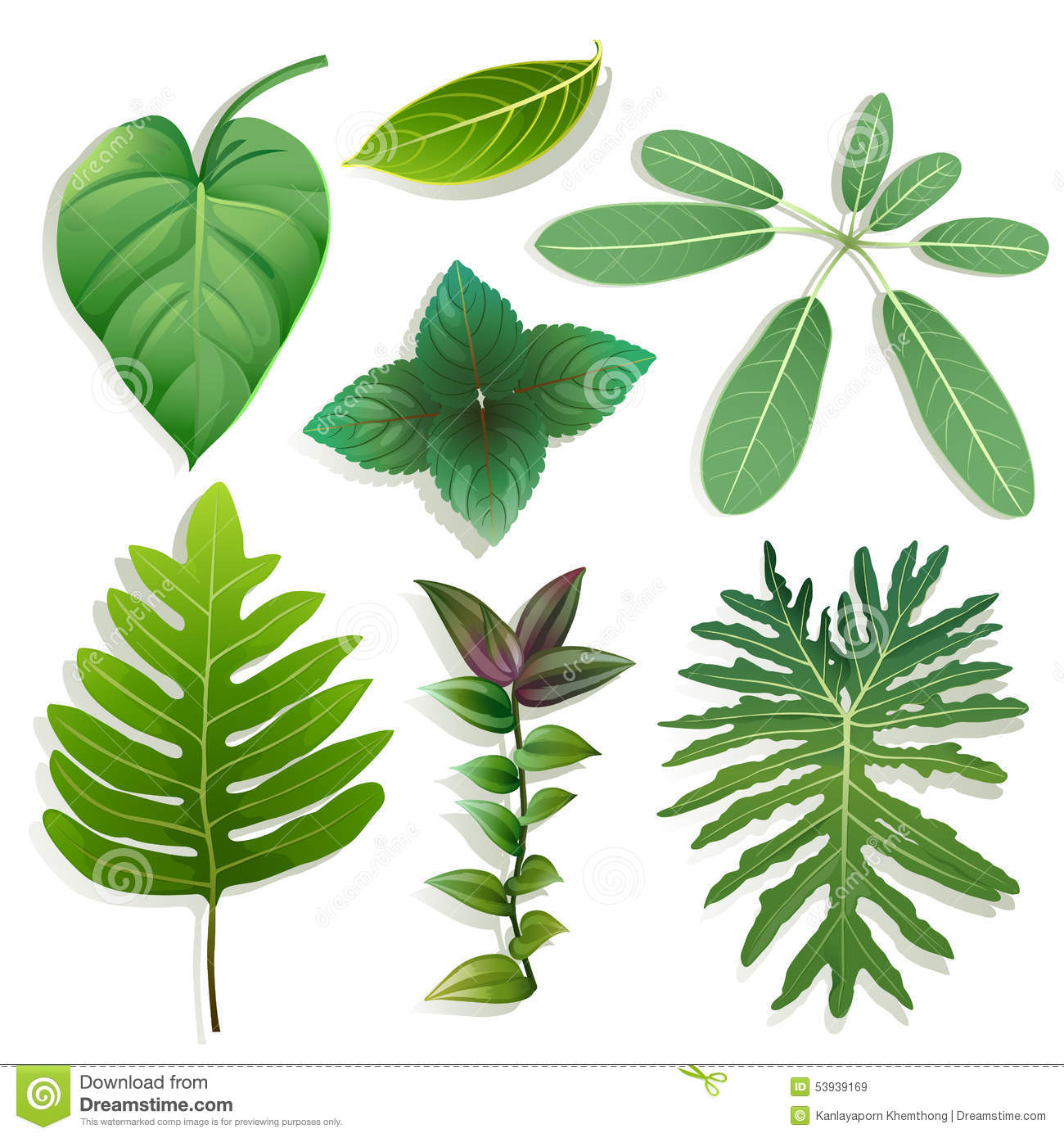 different shape of leaves stock vector image 53939169