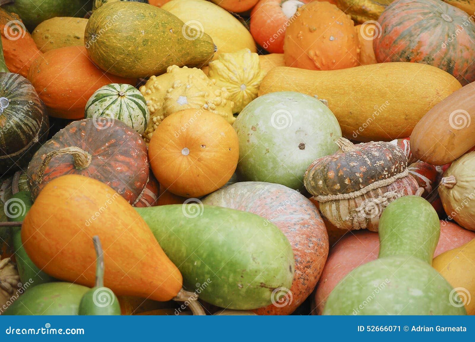 Different species of pumpkins