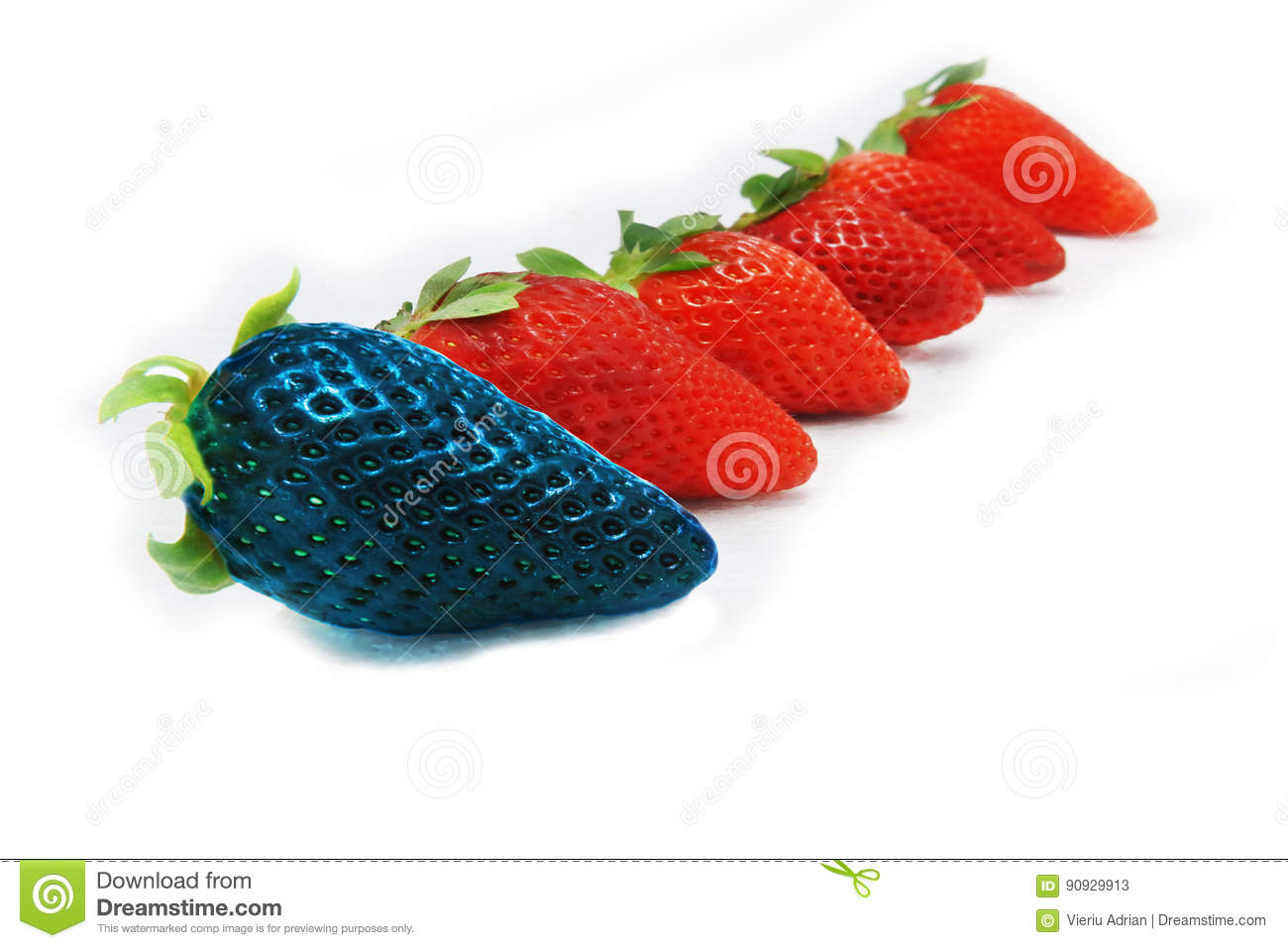 Different than the rest alone blue strawberry.Concept for genetically modified food