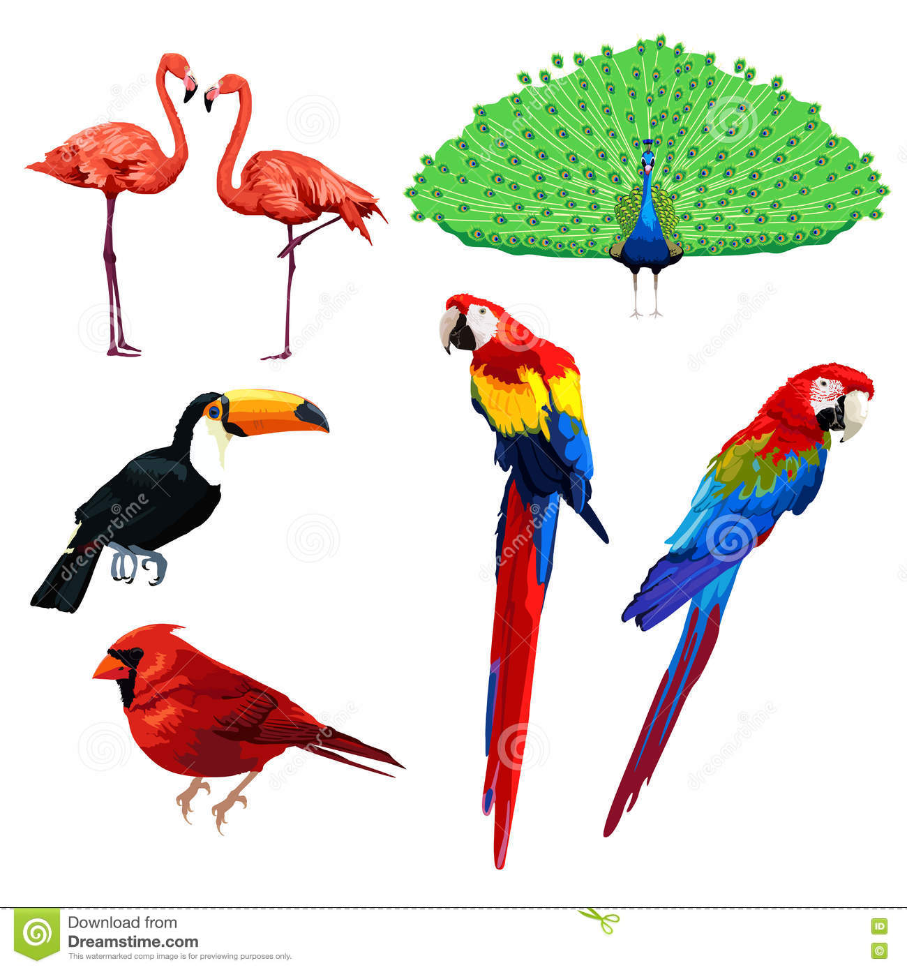 different type of birds stock vector image 73178618