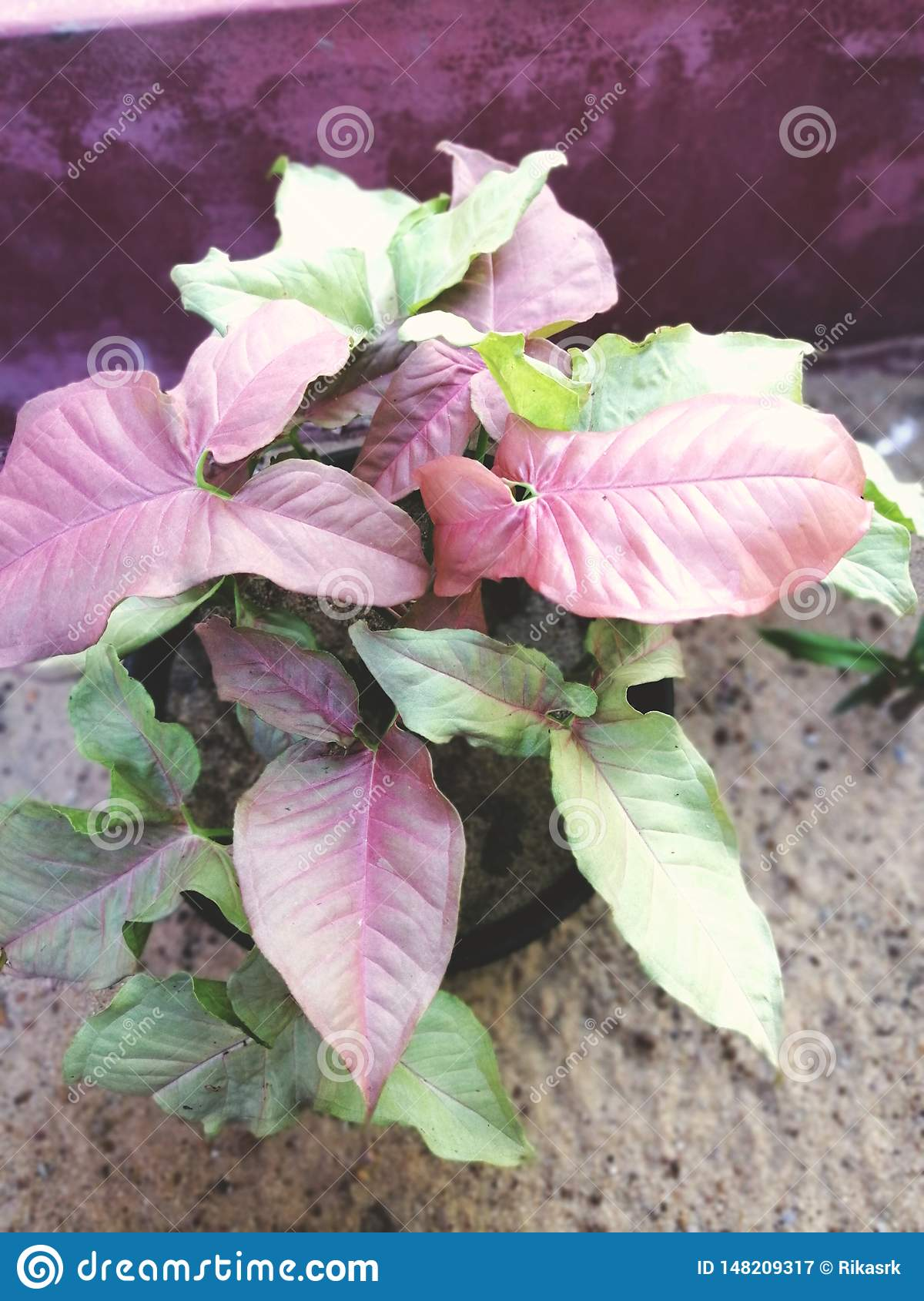 Different type of croton plant