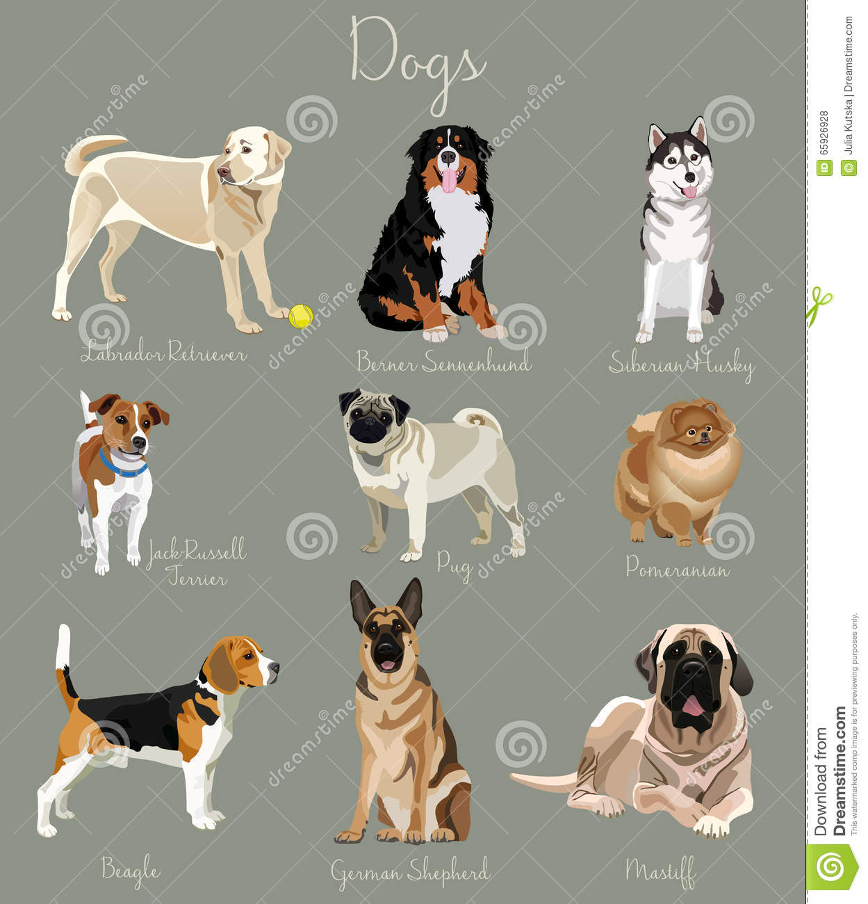 Different type of dogs set isolated big and small animals for What type of dog is this
