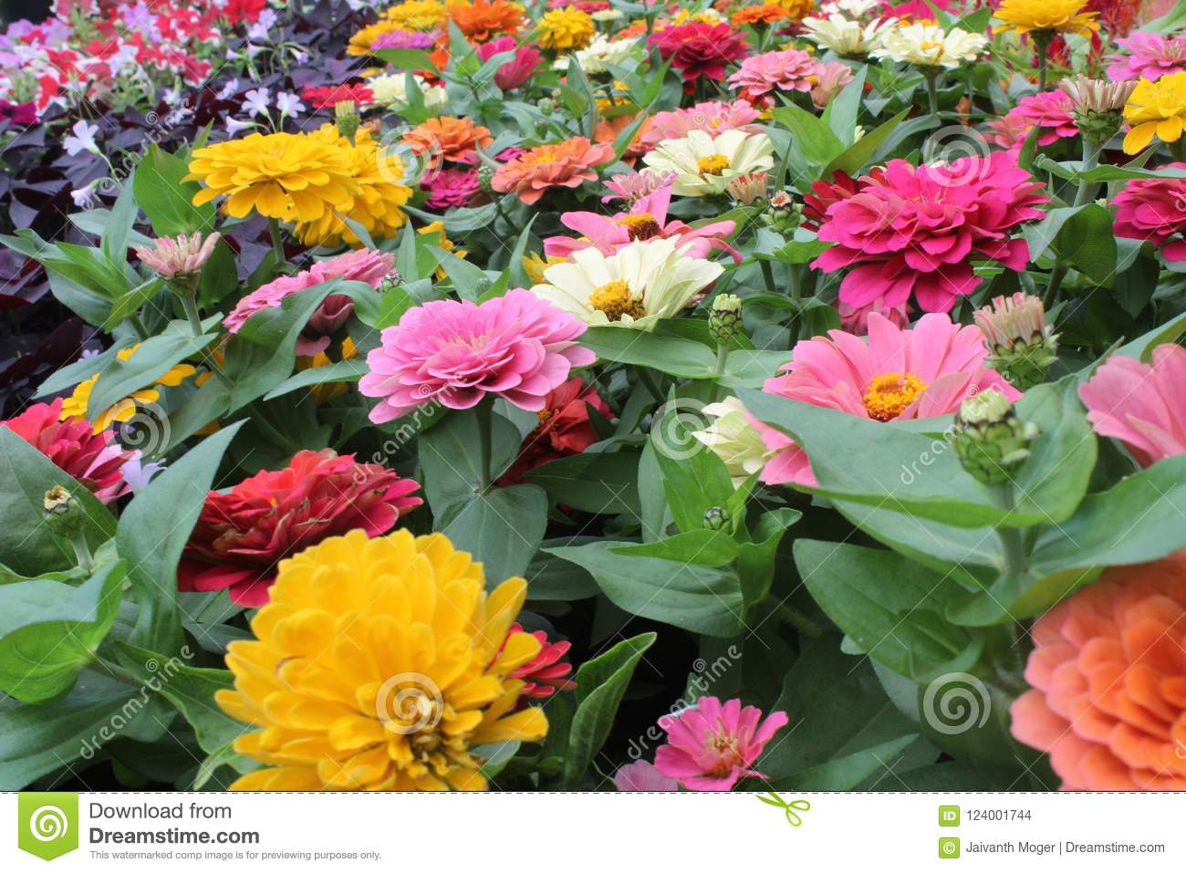 Different type of flowers image stock photo image of desktop download different type of flowers image stock photo image of desktop wallpaper 124001744 izmirmasajfo