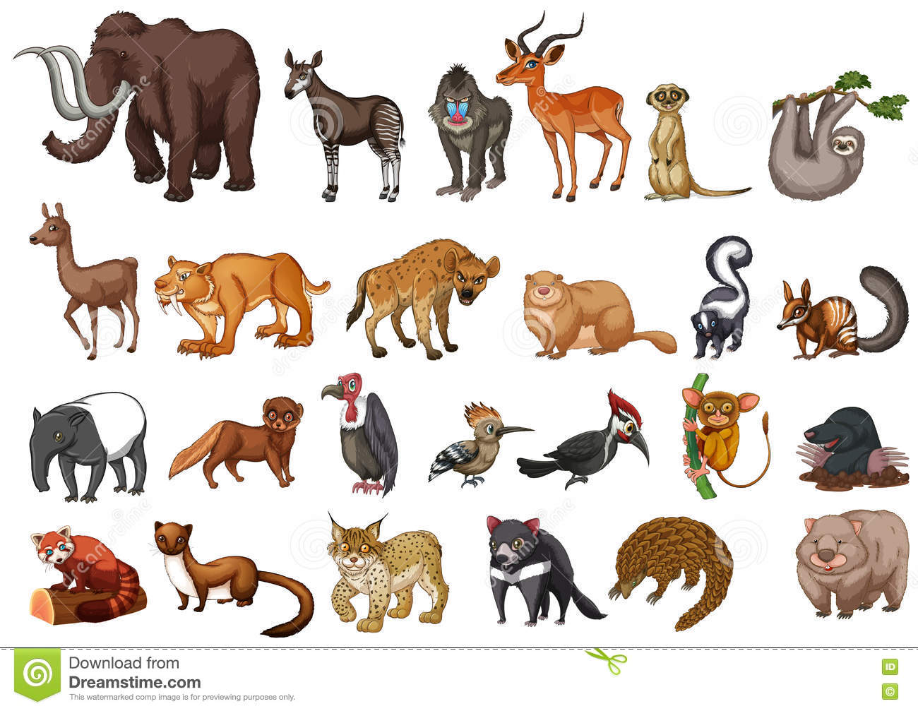 Different Type Of Wild Animals On White Stock Vector ...