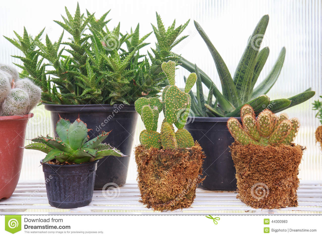 cacti different types cactus stock images 168 photos