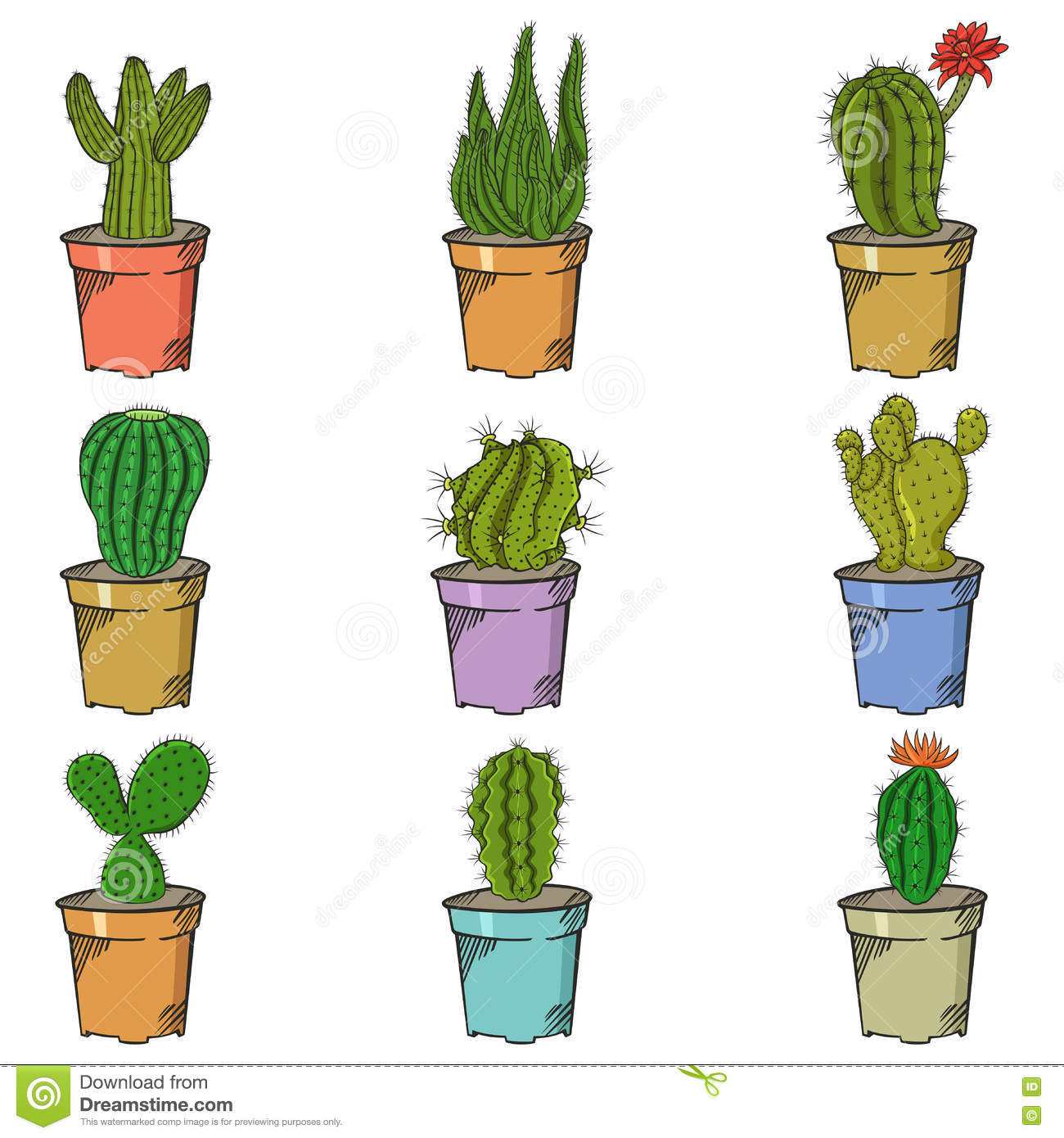Different Types Of Cactus Stock Vector Image 74459500