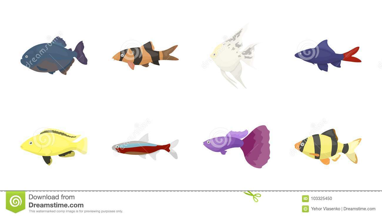 Different Types Of Fish Icons In Set Collection For Design Marine