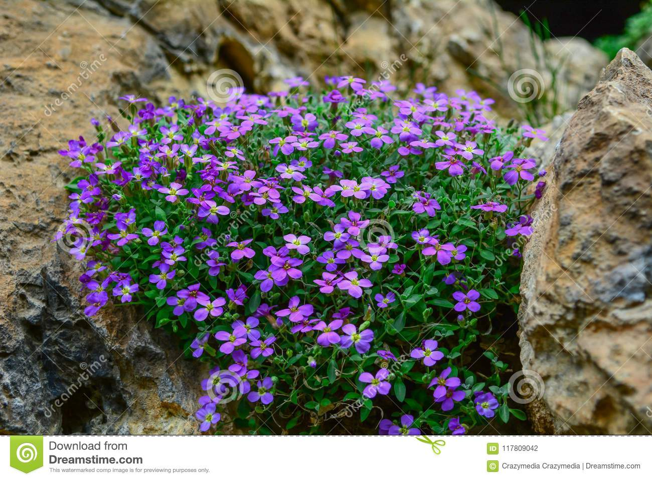 Different Types Of Flowers Growing Among Rocks Stock Photo