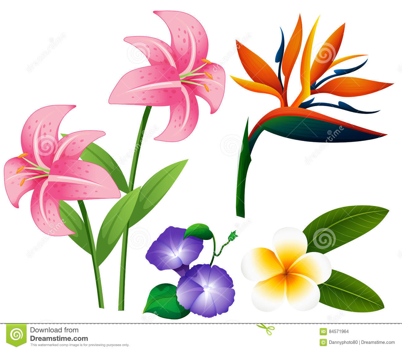 Different types of flowers stock vector Image of illustration