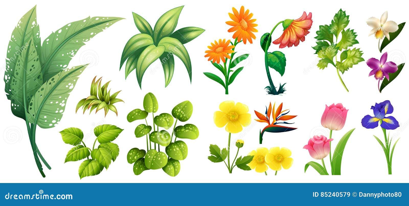 worksheet Different Types Of Leaves Worksheet different types of flowers and leaves stock illustration leaves