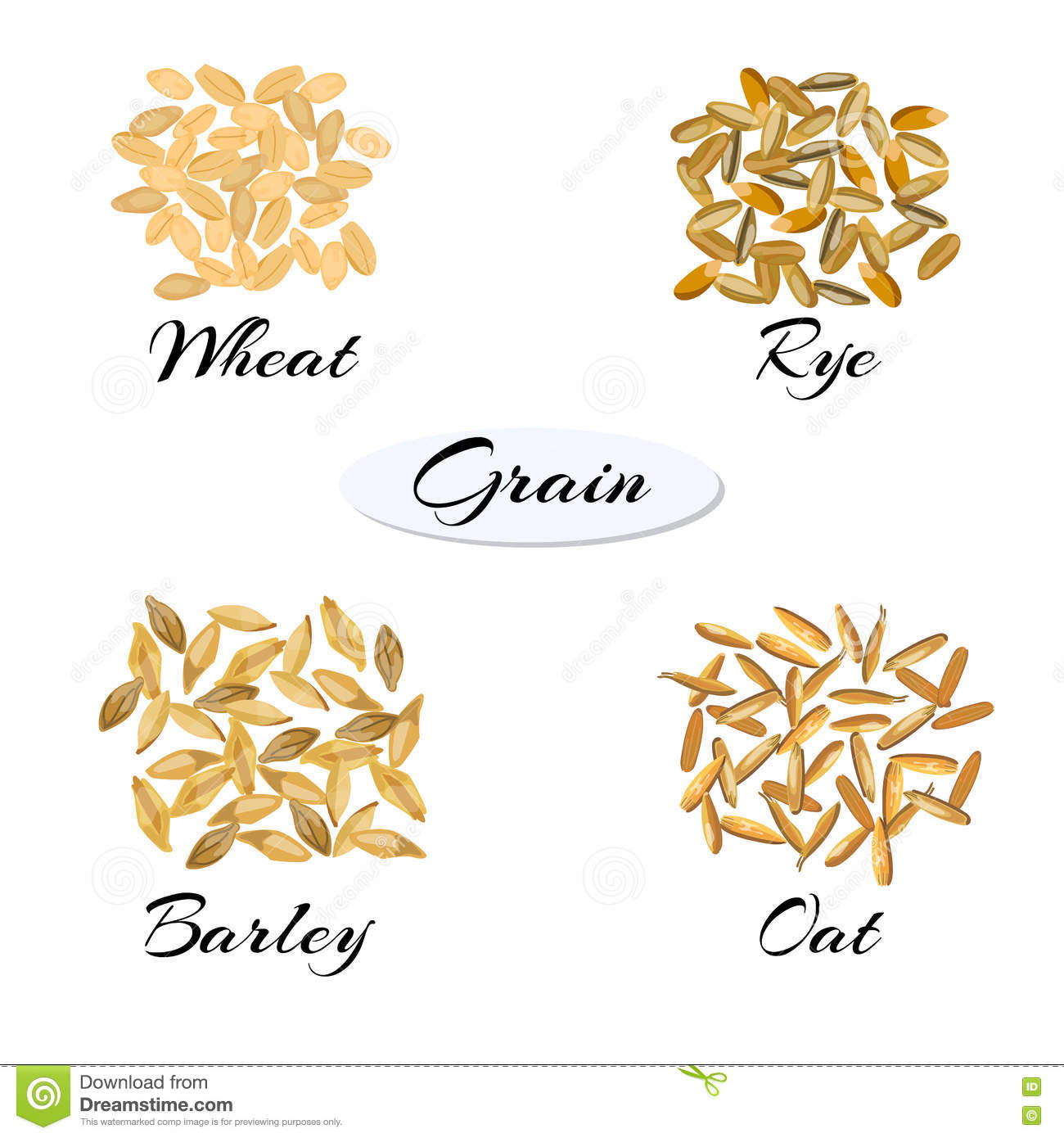 Different Types Of Grain. Stock Vector. Illustration Of