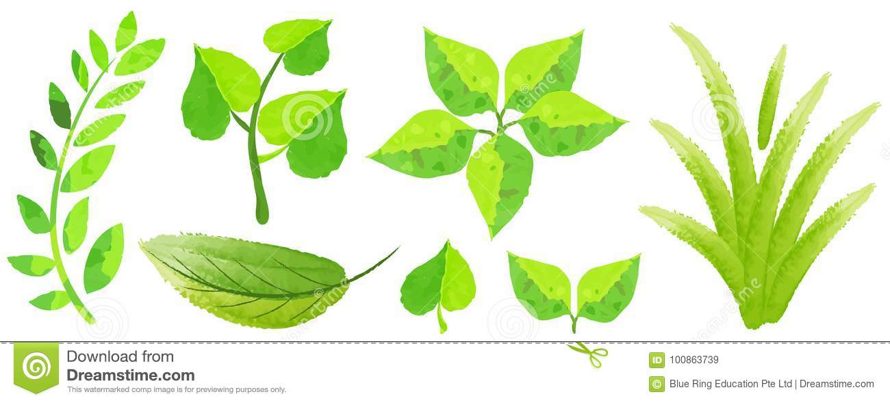 Different Types Of Green Leaves In Watercolor Style Stock