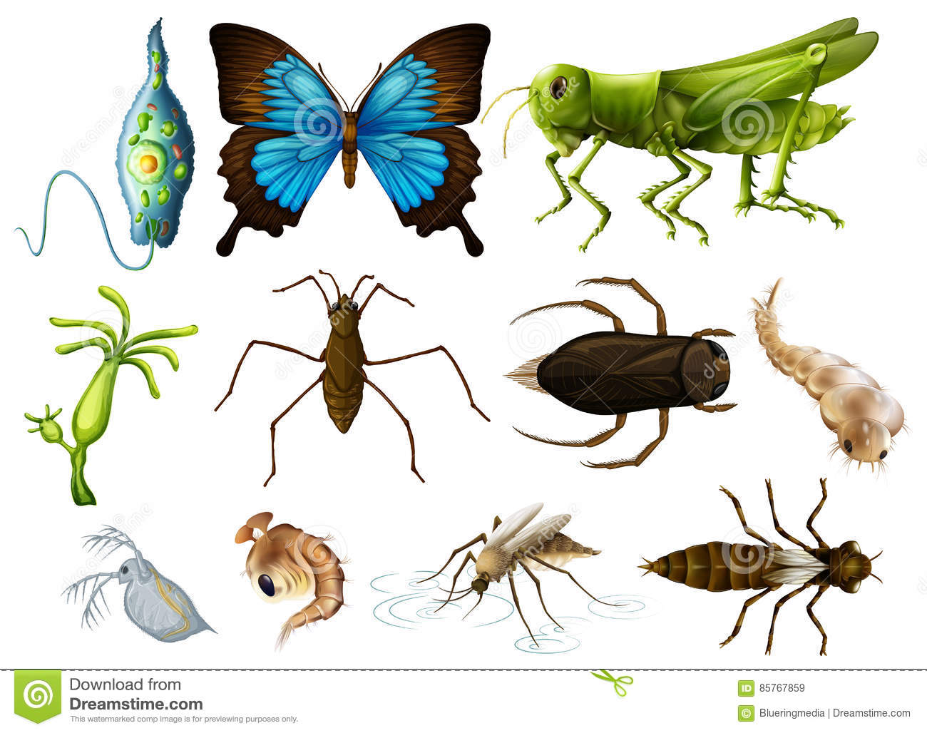Different Types Of Insects On White Background Stock Vector ...