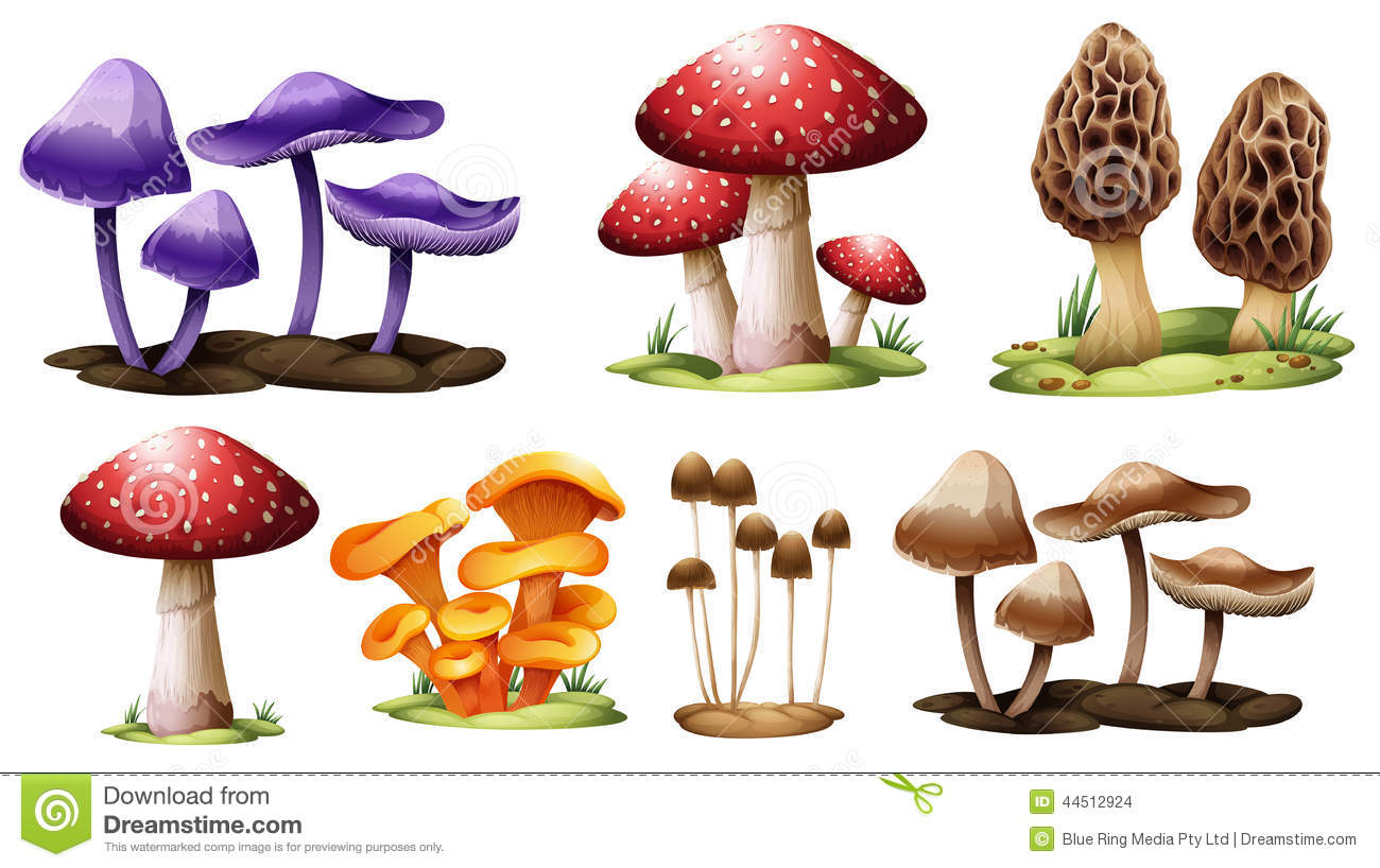 Illustration of the different types of mushrooms on a white background ...