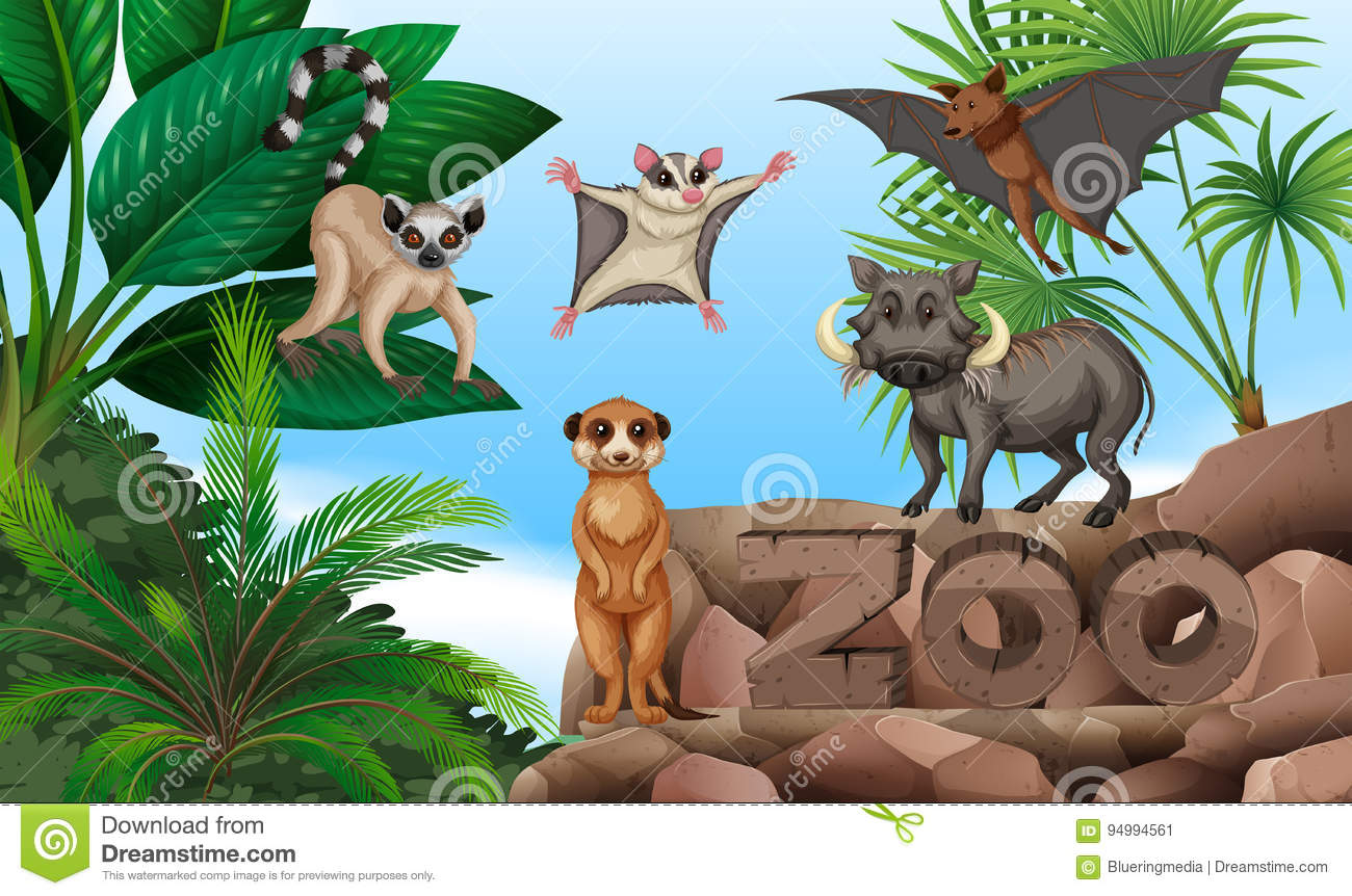 Different Types Of Wild Animals In The Zoo Stock Vector ...
