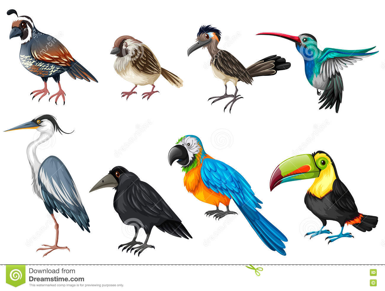 Different Types Of Wild Birds Stock Vector  Illustration