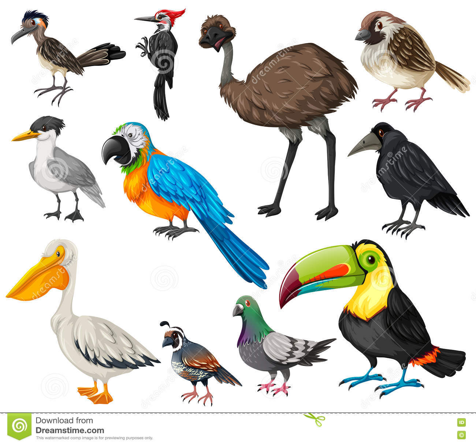 Different Types Of Wild Birds Stock Vector Image 78707665