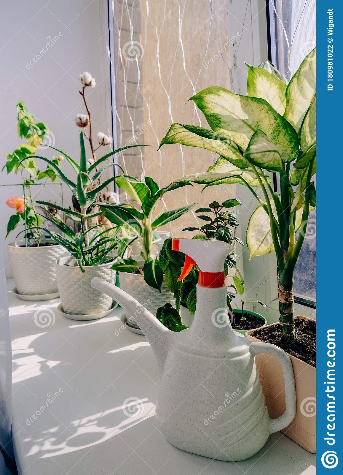 4 598 Apartment Indoor Plants Photos Free Royalty Free Stock Photos From Dreamstime