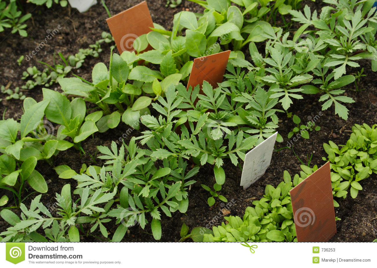 Different vegetable seedlings with marking labels