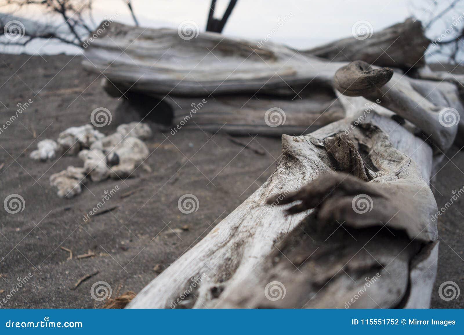 Diftwood été perché par bord de la mer de Peacfull sur le sable noir