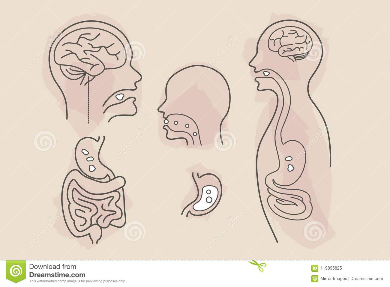 Digestive System Eating Food Vector Line Art With Color Splashes