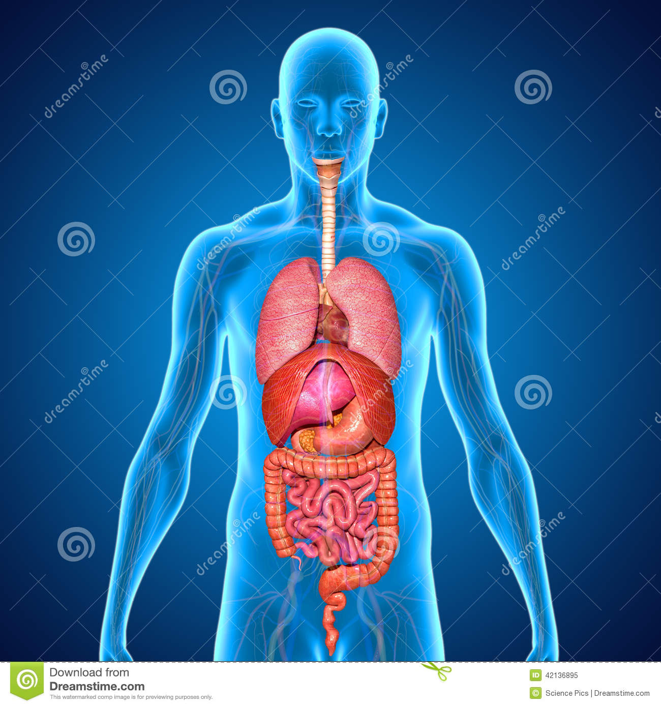 Three facts about human digestive system animation video free download human digestive system animation video free download powerpoint template toneelgroepblik Images