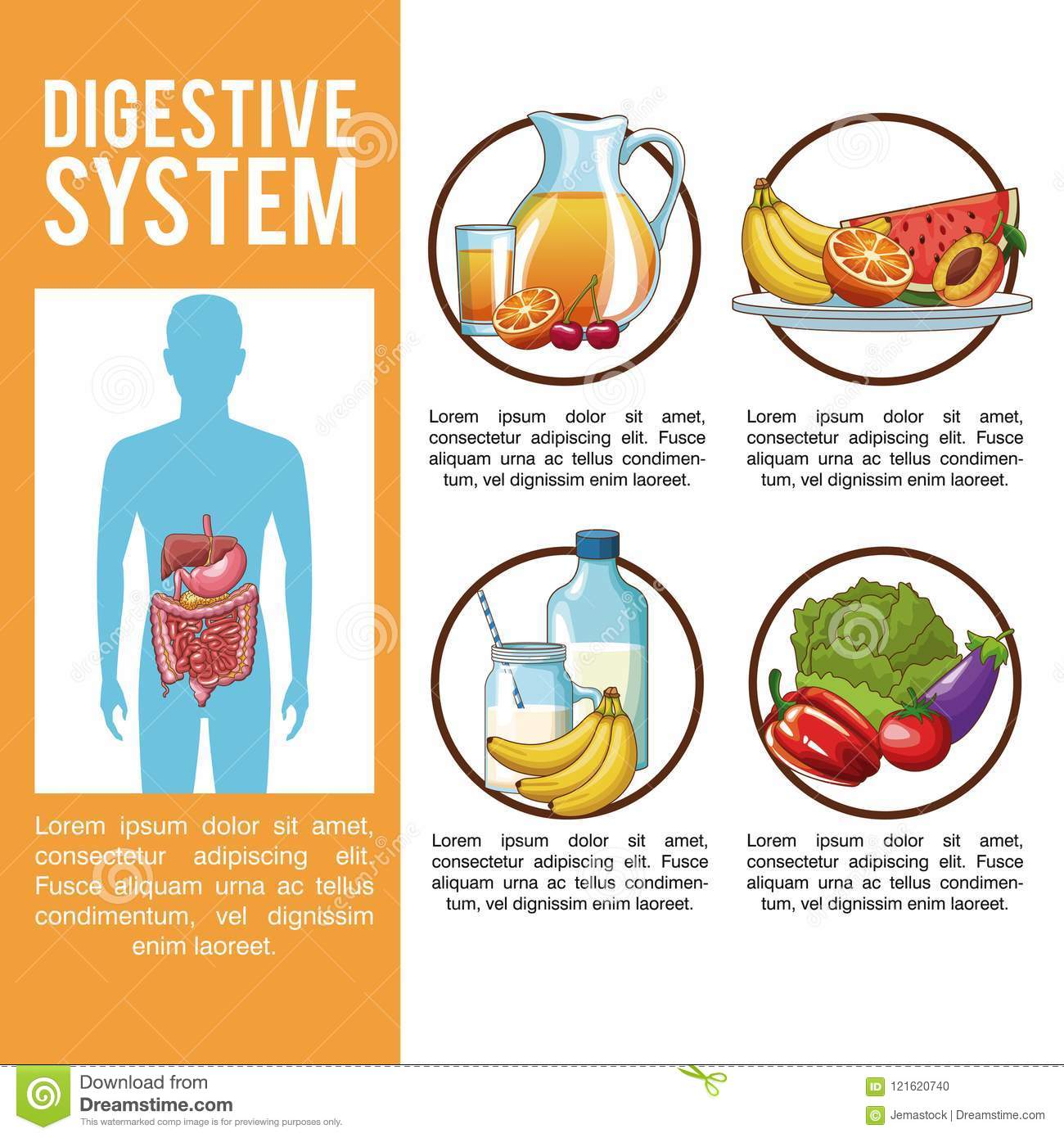 Digestive System Poster Stock Vector Illustration Of Healthy