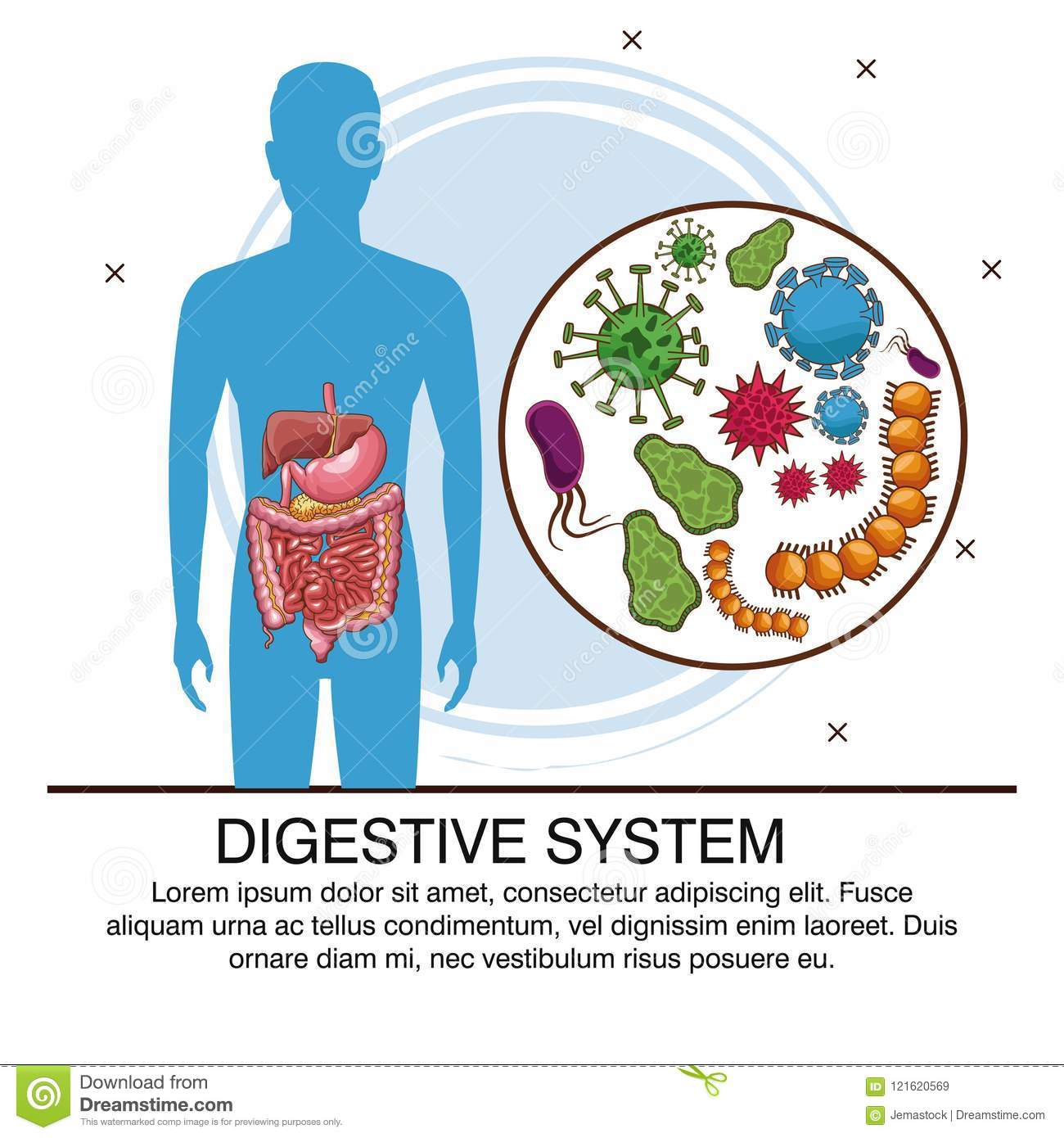 Digestive System Poster Stock Vector Illustration Of Disease
