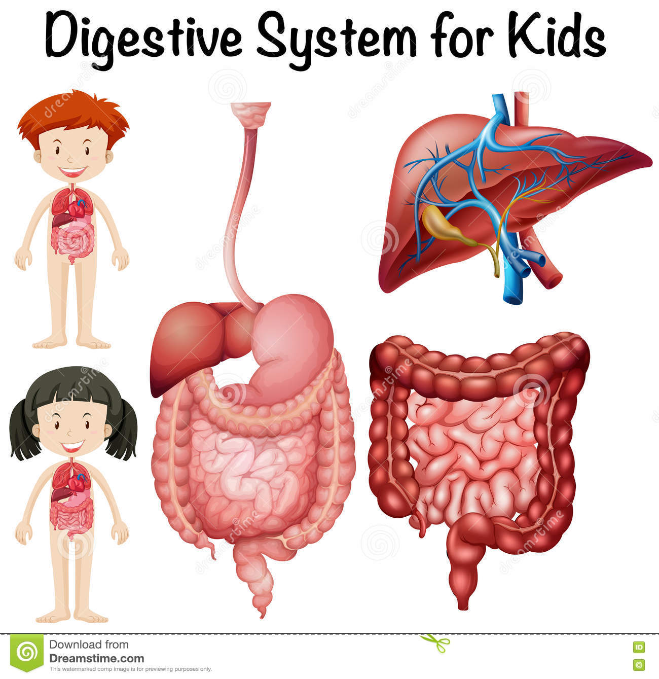 Digestive system for kids stock vector. Illustration of ...