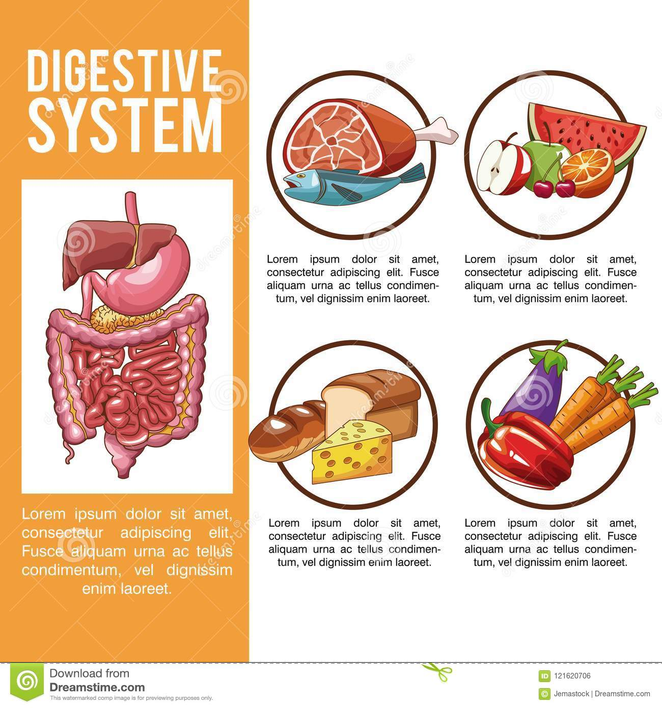 Digestive System Poster Stock Vector Illustration Of Fruits 121620706
