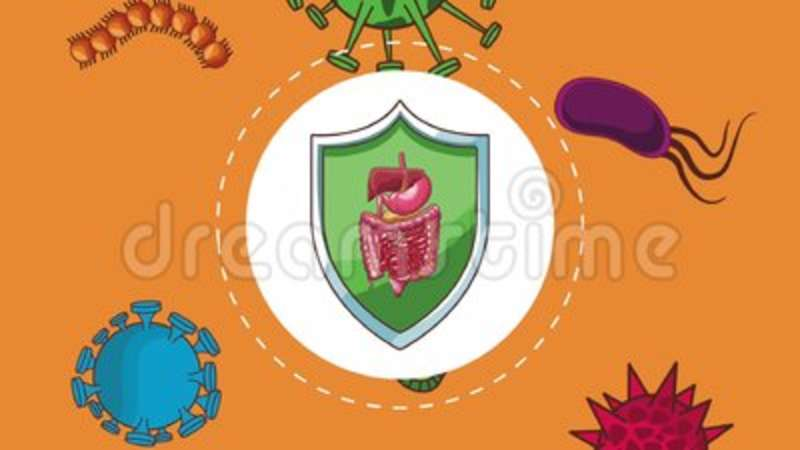 Digestive System Protection Hd Animation Stock Footage Video Of