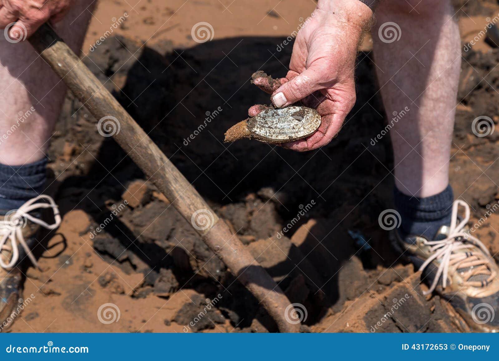 Digging Clams