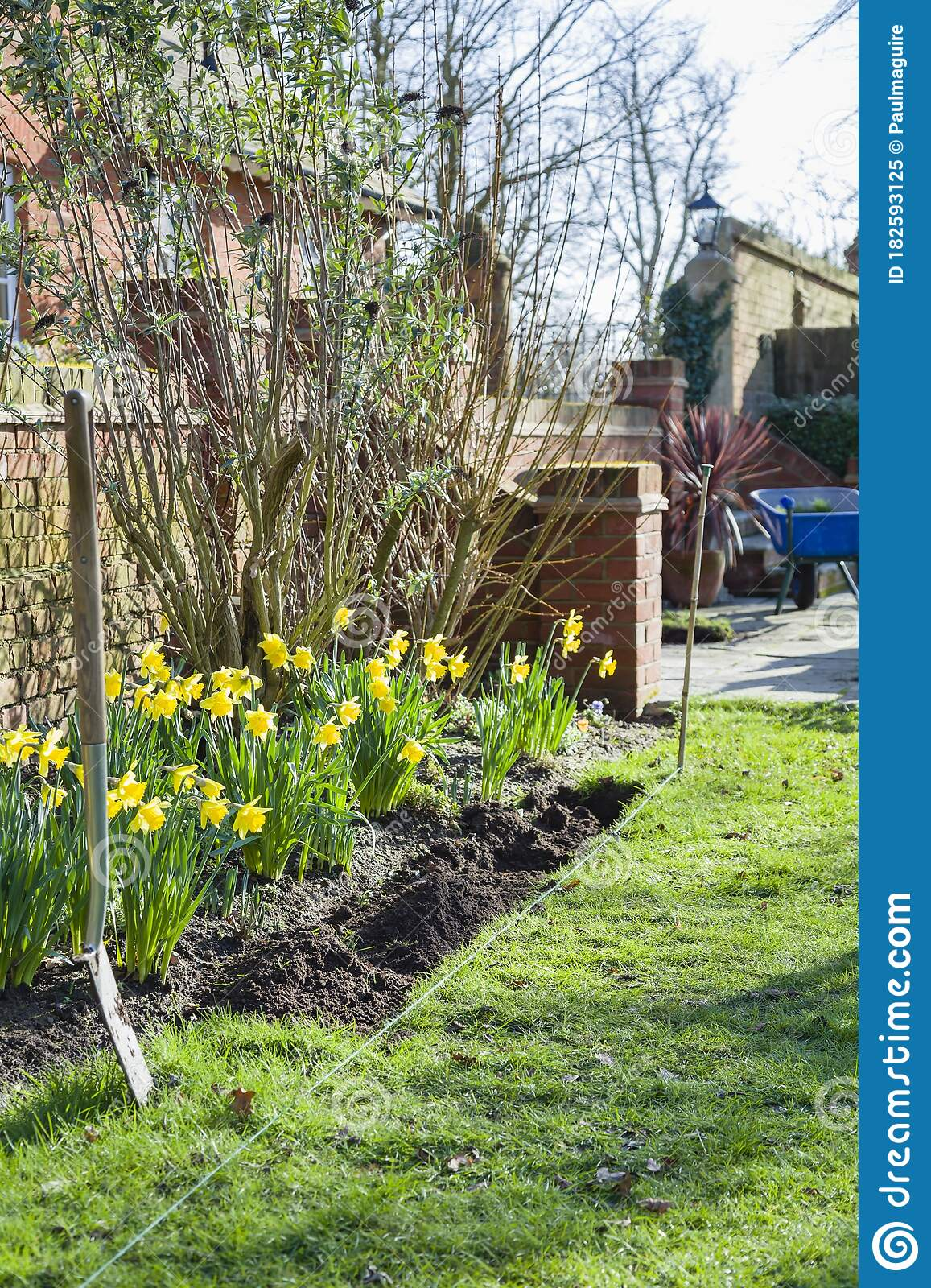 Picture of: Digging A Flower Bed Or Garden Border Gardening In Spring Uk Stock Image Image Of Maintenance Daffodils 182593125