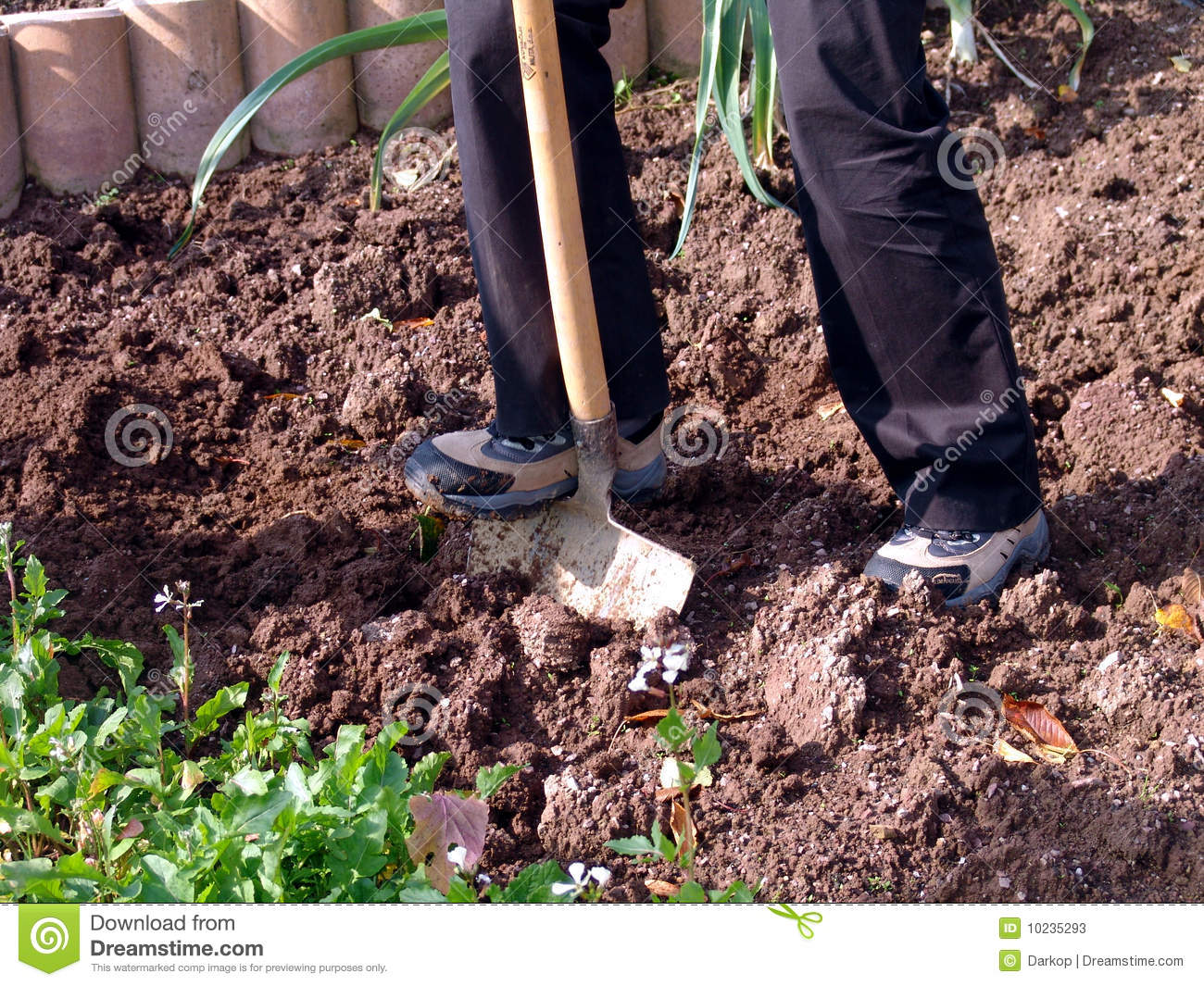 Digging in a garden stock photography for Digging ground dream meaning