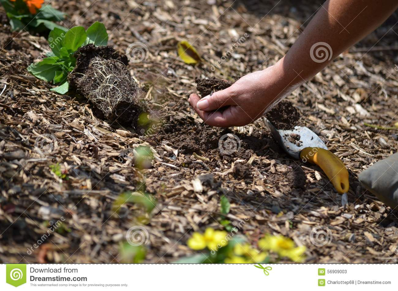 Digging in the garden stock image image of gentle love for Digging ground dream meaning