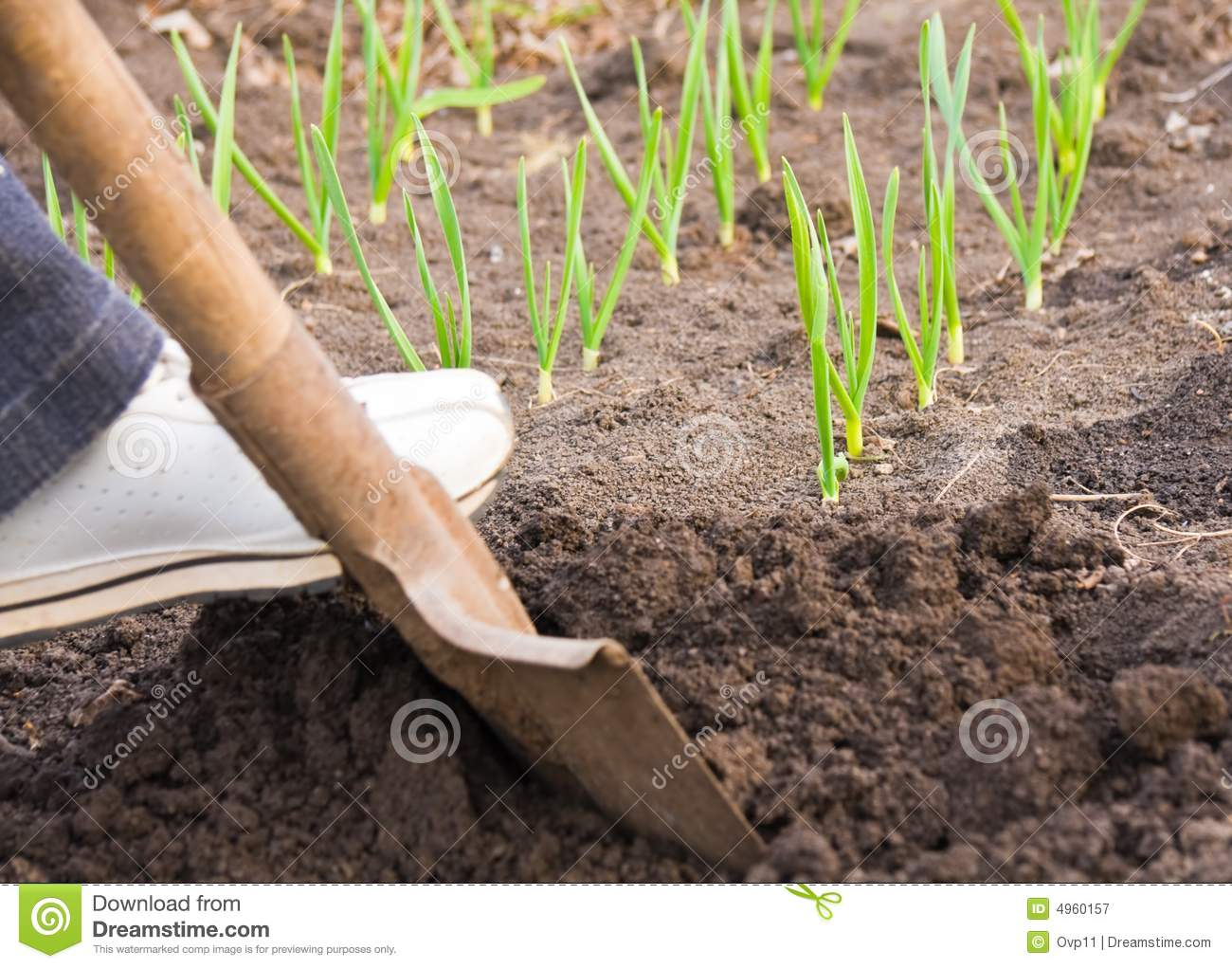 Digging ground in spring royalty free stock photography for Digging ground dream meaning