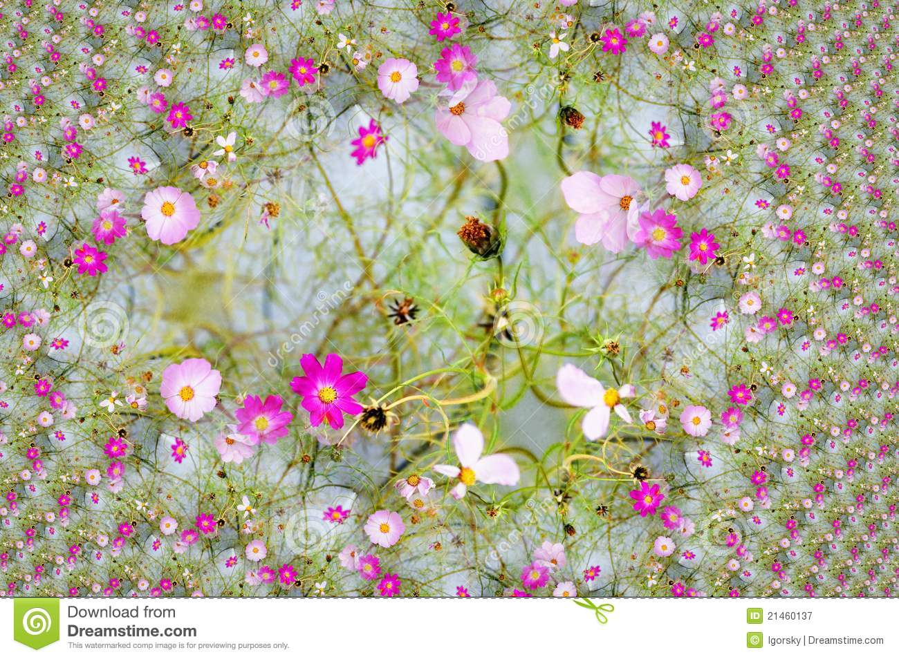 Digital Design With Pink Daisy Stock Image Image 21460137