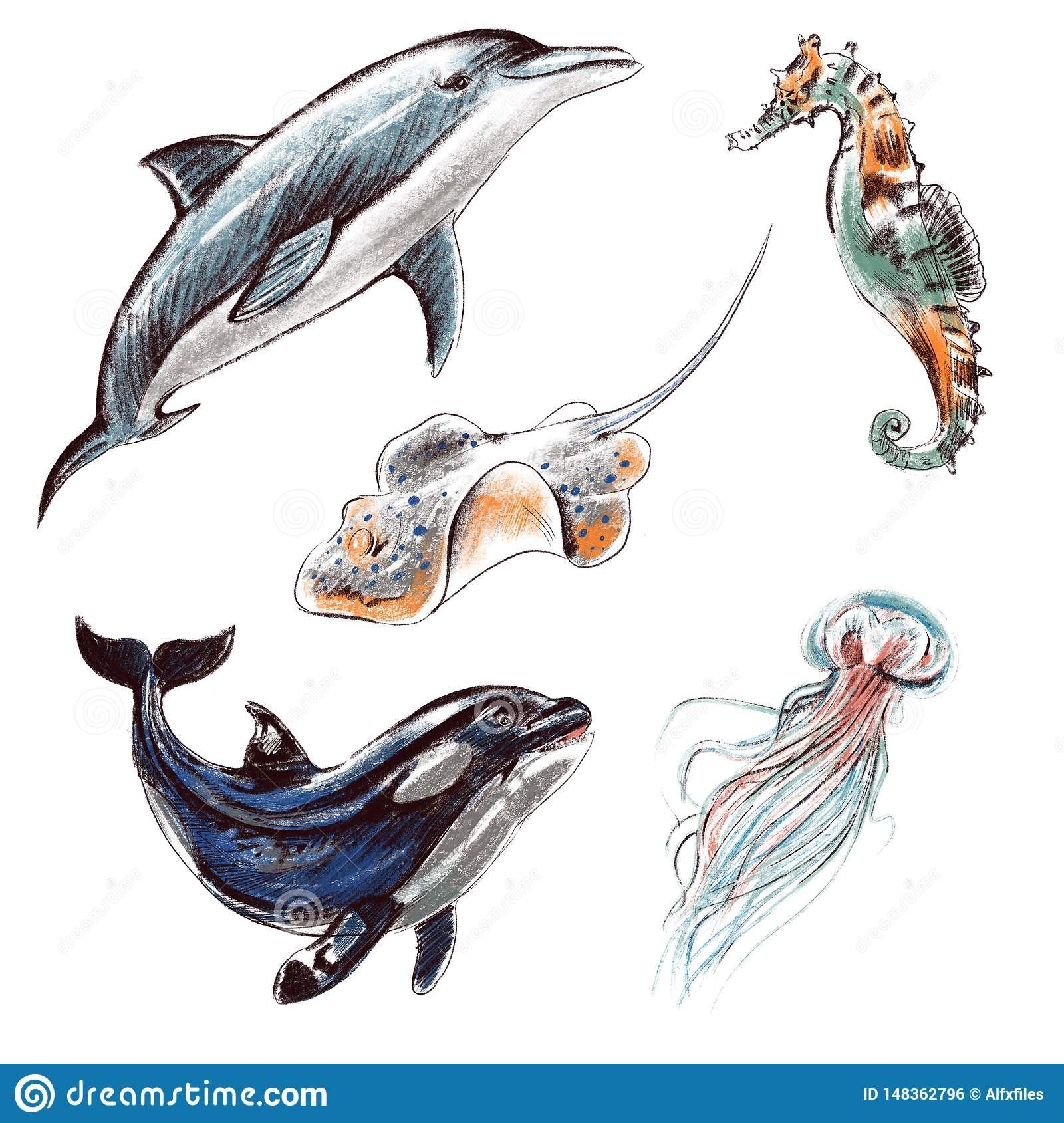 Digital Illustration Set Imitating Colored Pencils Realistic Drawing Sea And Ocean Creatures Dolphin Killer Whale Jellyfish Stock Illustration Illustration Of Animal Dolphin 148362796