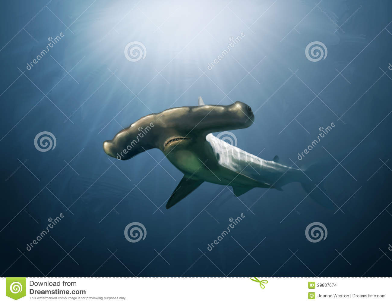 hammerhead shark painting stock images image 29837674