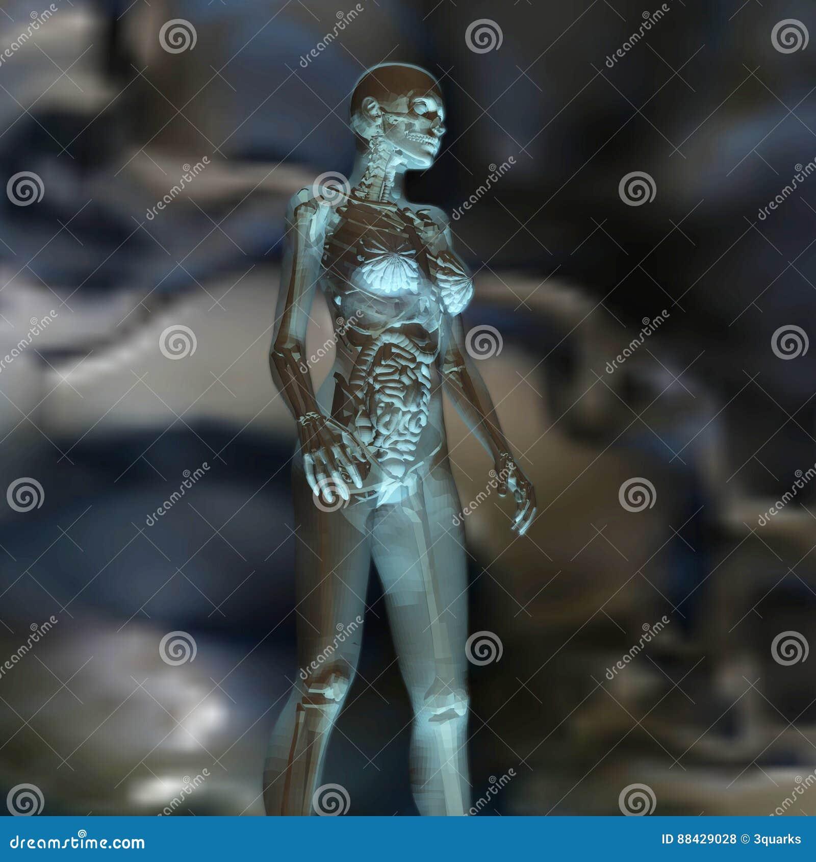 Digital Rendering of the female human Anatomy