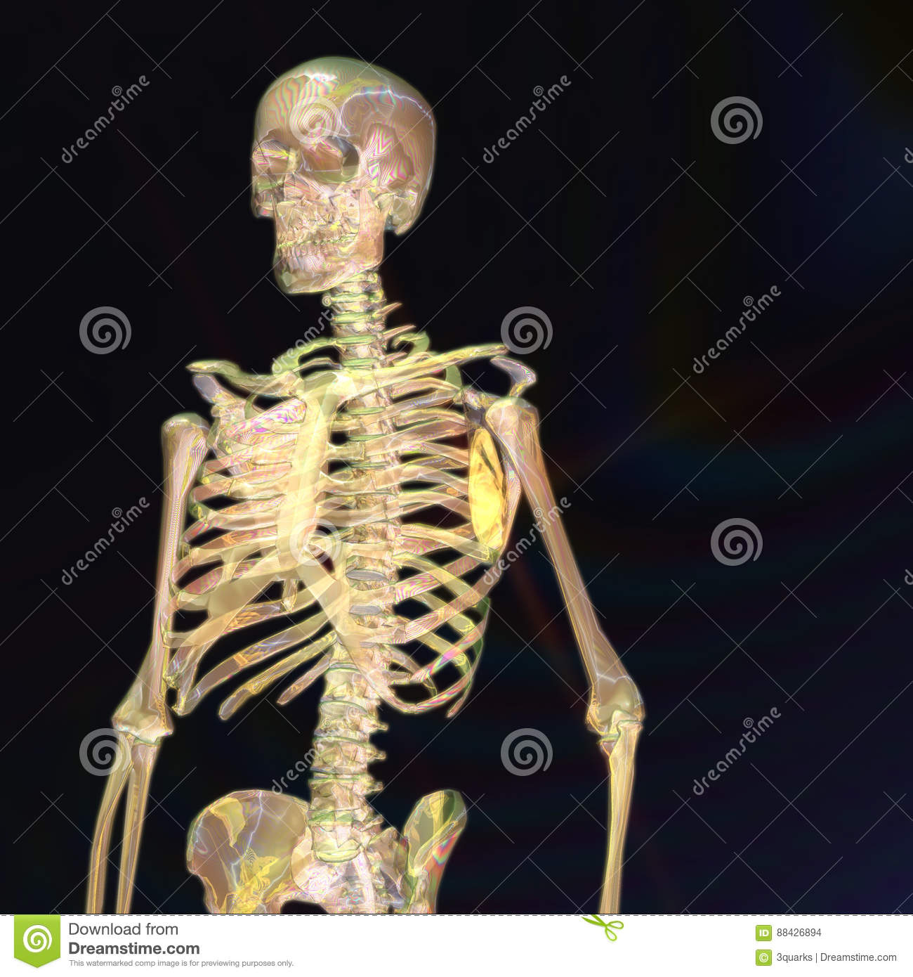 Digital Rendering of a human Skeleton