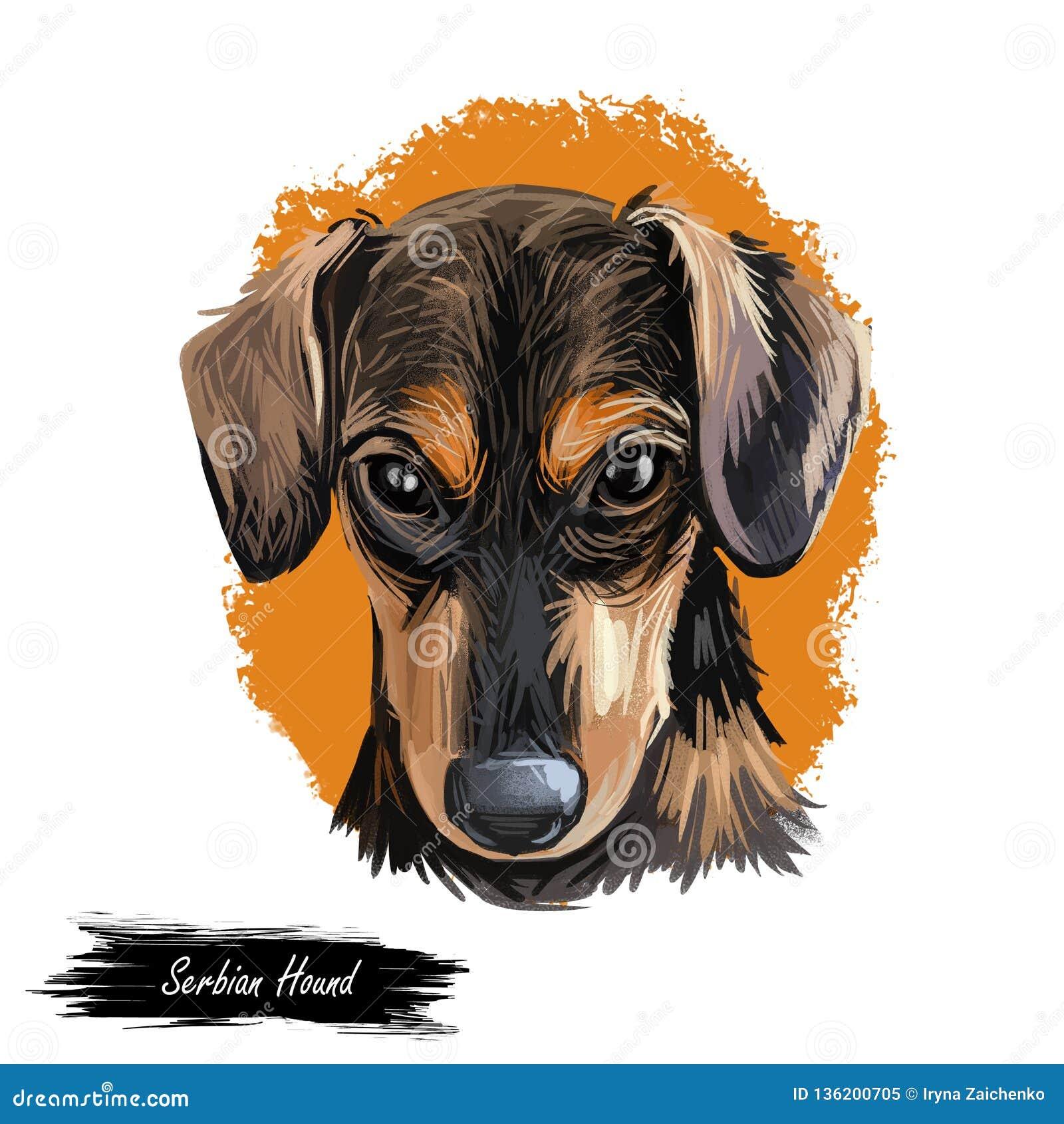 Digitale Kunst des serbischen Jagdhundhaustieres, Aquarellhandgezogenes poritair vom Eckzahn Haustier von Serbien und von Montene