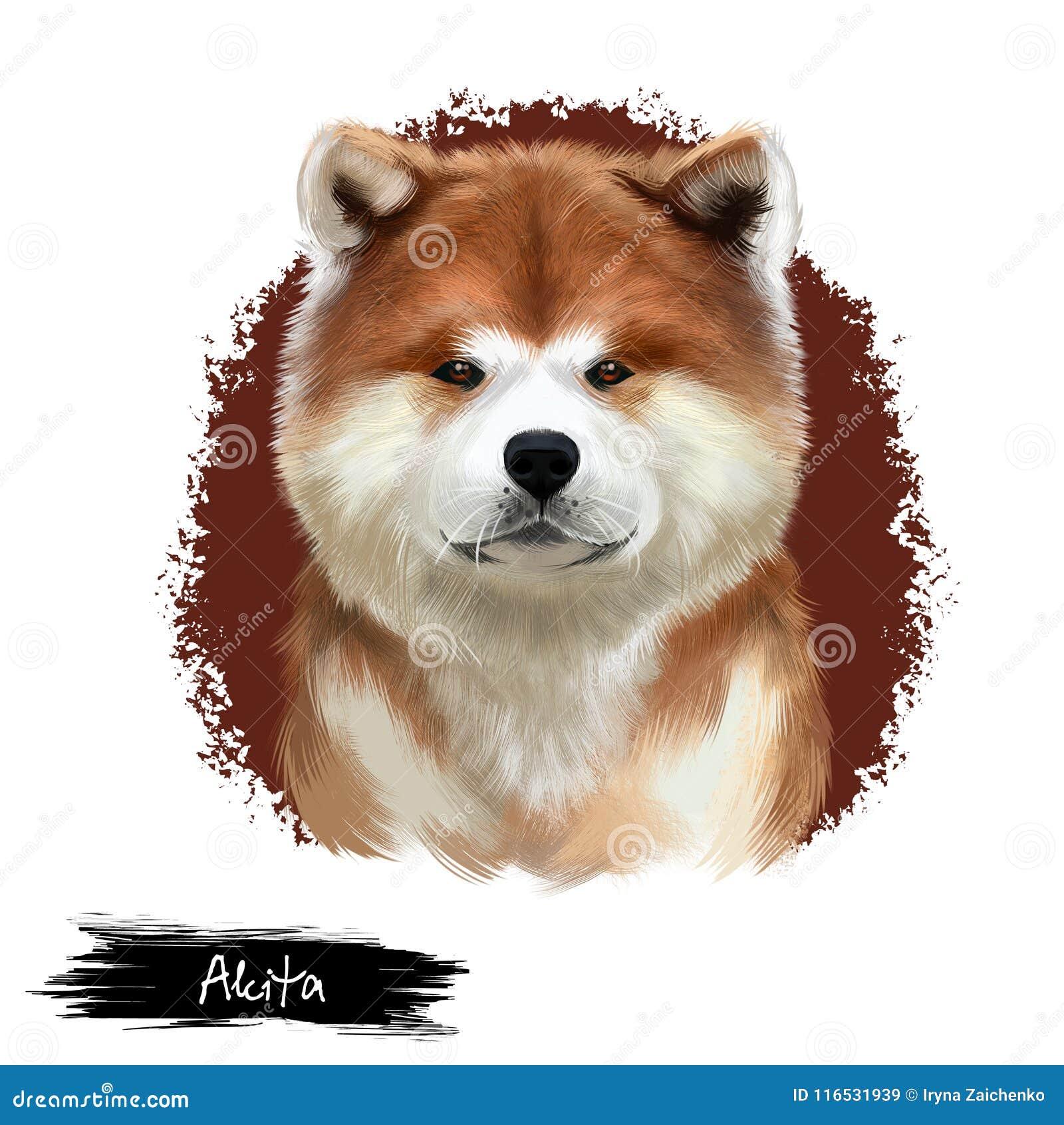 Digitale Kunstillustration Akita-Zucht lokalisiert auf Weiß Nettes inländisches reinrassiges Tier Große Zucht des Hundamerikaners